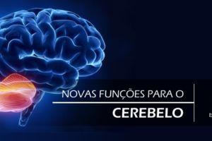 Para que serve o cerebelo? Estudo revela novas e inesperadas funções