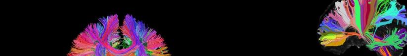 projeto conectoma humano
